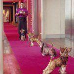 Ouverture d'un hôtel pour chiens à Vincennes, qu'en pensez-vous ?