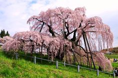 福島県の観光スポット24選。定番&穴場まで! - Find Travel