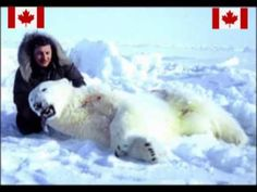 Canada's polar bear killing shame - YouTube