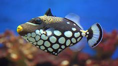 peces bonitos - Buscar con Google