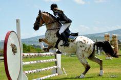 #horse jumping