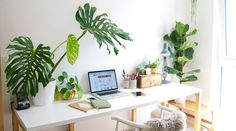 Have you ever thought about Decorating the Office with Plants? Its importance goes beyond aesthetics to the psycho-physical level. Let's try!