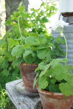 Nothing prettier than a green plant in a terra cotta pot. Perfectly imperfect.