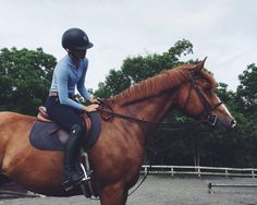 SOBASICALLYHORSES : Photo