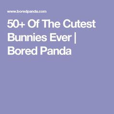 50+ Of The Cutest Bunnies Ever | Bored Panda