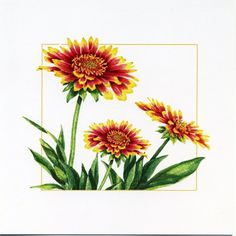 """Watercolor greeting cards by Mickey Baxter-Spade. Blank inside. 5"""" x 5"""". $5 each, Box of 6 cards, 7 envelopes. $20"""
