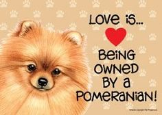 I love my POMeranian