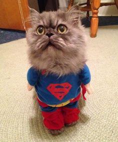 It's #NationalSuperheroDay! ... Superman! ... #catlife http://www.goodpet.com
