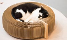Tinty Foldable Cat Bed: Elegant Home Fashions Tinty Foldable Cat Bed