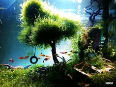 Home Aquarium Ideas: The Aquarium Buyers Guide #moss #aquarium