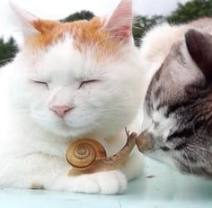 This might be the most unusual interspecies family we've ever seen — two cats seem to have adopted a little snail.