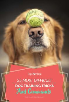 25 Hardest Tricks & Commands to Train Dogs (from easiest to hardest). Dogs are a good provider of joy and companionship. This is especially true if you teach them a lot of tricks and commands. Whether you teach your dog to sit, roll over or catch a ball, any trick will surely bring a smile to your face every time you see your pet perform a trick that you taught him. But some tricks are easier to train than others. #dogs #pets #training #dogtraining #tricks