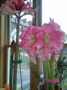 Charlie-Nardozzi-Flower
