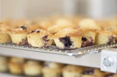 SHORTBREAD: Healthy Blueberry Muffins