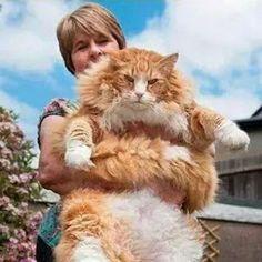 Linda mama con su hermoso y gigante gatito!!!!!!
