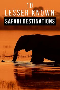 Here's a list of safari destinations which, whilst less well known, are still accessible for the overseas visitor and have suitable accommodation options available. Each destination has, for one reason or another, not yet 'made it' onto to the regular tourist routes, so if you want to travel off-the-beaten-path in Africa, check out this unconventional list!