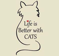 New tattoo dog cat quotes ideas I Love Cats, Cute Cats, Funny Cats, Funny Humor, Crazy Cat Lady, Crazy Cats, Gatos Cats, Cat Quotes, Cat Sayings
