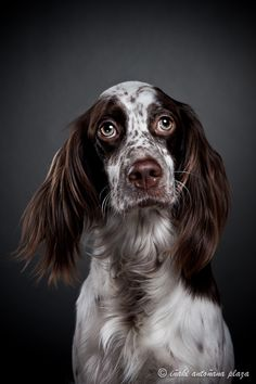 need to tell Maggie about English Springers, Uncle Jody, and Uncle Jack's JUDY!!