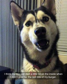 Funny Pictures Of The Day - 48 Pics #compartirvideos #uploadfunny