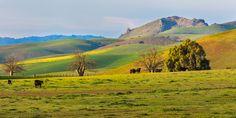 Tres Pinos, California