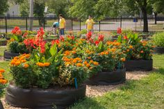 NGB Growing for Futures: Therapeutic Garden for Young Adults with #autism watering beautiful cannas and marigolds at the Growing Solutions Farm. Donate at www.ngb.org