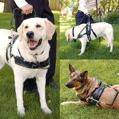 Service dog harness $ 440, this is the harness i want to get!