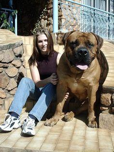 Big Dog  Big Dogs = Man's Best Friend / www.PetWellbeing.org