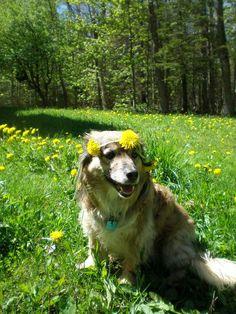 TU SALUD Y BIENESTAR : Plantas de uso veterinario para animales