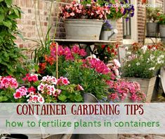 Feeding your plants in containers regularly is even more important than in the…