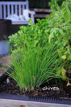 DIY garden. These chives are the perfect garnish to just about everything. love!