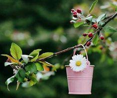 Happy Flowers, Beautiful Flowers, Daisy Love, Beautiful Fantasy Art, Perfect World, Floral Border, Border Design, Miniatures, Techno