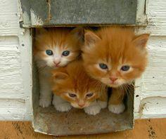 Cute!