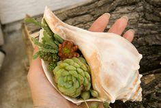 DIY Succulent Mini Garden Seashells Sea Shell by AiyaHMPH on Etsy