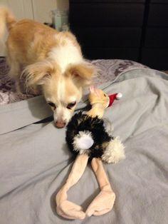 Sadee & fav toy