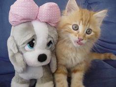 Lovely-Kitty Cats