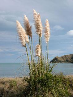 Mahia Beach, love this place xo Milford Sound, Kiwiana, South Island, My Childhood Memories, Countries Of The World, Nature Photos, Beautiful World, New Zealand, National Parks