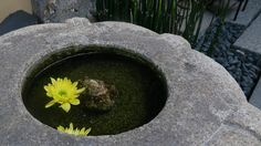 The display in front of the restaurant is flowers float up water in a hollow of stone.