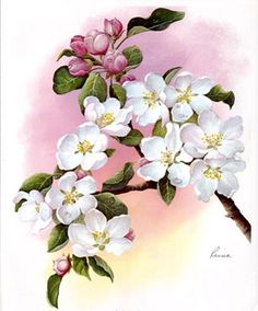 Apple Blossoms (*)