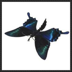 This science paper model is designed by canon papercraft. A type of swallowtail butterfly with beautiful wings that have a bluish-green shine. They can oft