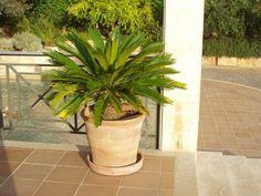 Plants, Majorca, Plant, Planets