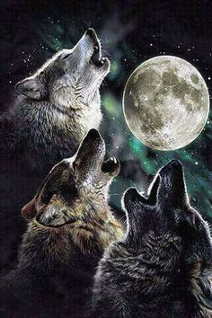 Beautiful Wolves Howling At The Moon