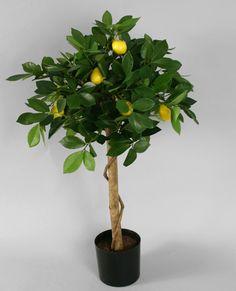 Apelsinträd / Citronträd