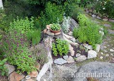 Miksi poistaa kantoja väkipakolla, kun niiden ympärille voi luoda näin suloisen yrttitarhan! Garden Inspiration, Garden Ideas, Log Homes, Garden Planning, My Dream Home, Stepping Stones, Oasis, Zen, Backyard