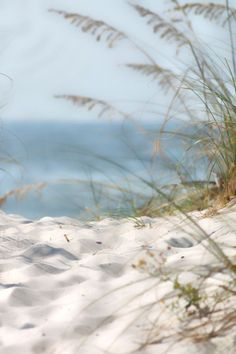 Gentle Grasses and White Sand...