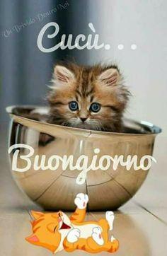 Costura Tutorial and Ideas Good Night, Good Morning, Italian Memes, Wordpress Theme, Blog, Animals, Roxy, Italy, Phrases In Italian