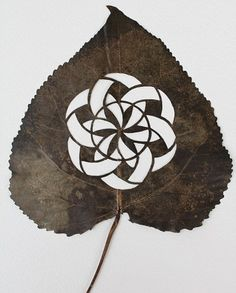 Intricate Hand-Cut Leaf Designs Reflect Wonders of Nature - My Modern Metropolis