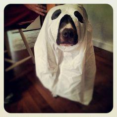 Rover.com Halloween Costume Contest! http://apps.facebook.com/offerpop/Contest.psp?c=203105=52733=254553244581393=199712676794499=0=View