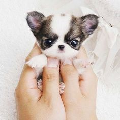 I love this puppy it's ADORABLE!!!!!
