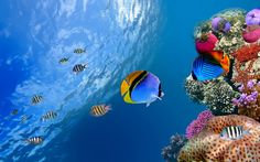 Ultra HD underwater coral fish 1920×1200