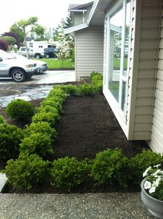 1000 Images About Landscaping On Pinterest Boxwood